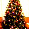 Daniel's Christmas tree from Pamplona, Espa�a