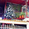 Sayara Nuñez's Christmas tree from Maracay, Aragua, Venezuela