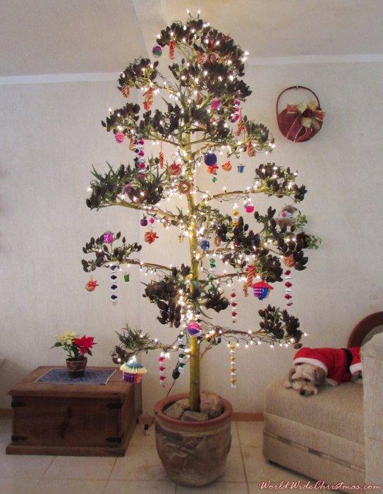 Quiote de agave tequilero hecho árbol de Navidad (Celaya, Guanajuato, México)