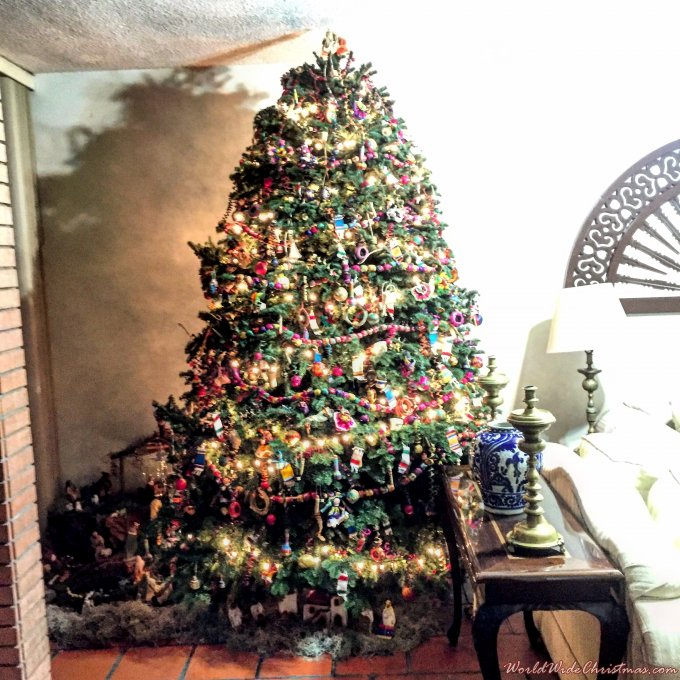 Mexican Pine (Monterrey, Mexico)