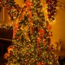 Sapin de No�l de Ben Randles (South Gloucestershire, England, United Kingdom)