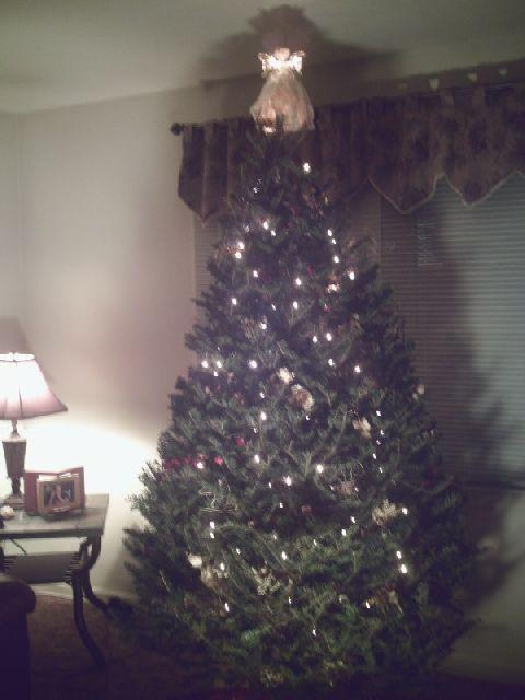 Carroll Tree (Franklinville, NJ, USA)