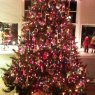 Maria Valentine 's Christmas tree from Wilmington DE