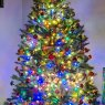 David Colgan's Christmas tree from Yonkers NY